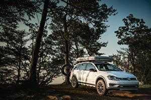 Fotos Volkswagen Bäume Weiß 2017 Golf Alltrack Country Concept automobil