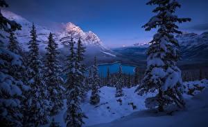 Photo Winter Mountain Landscape photography Canada Spruce Trees Snow Banff Peyto Lake Nature