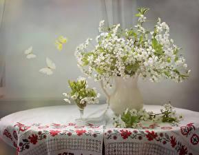 Fotos Sträuße Schmetterlinge Vase Ast Tisch Blumen