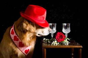 Hintergrundbilder Hunde Rosen Schwarzer Hintergrund Retriever Der Hut Herz Dubbeglas Tiere