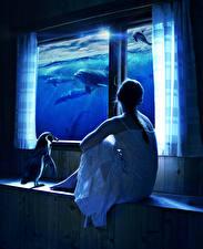 Fotos Delfine Pinguine Kreativ Sitzt Fenster Fantasy