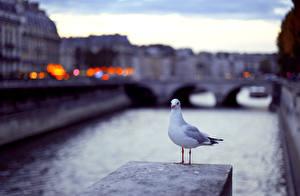 Bilder Möwe Vogel Kanal ein Tier