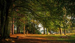 Fotos Irland Wälder Bäume Ast Castleblayney Monaghan Natur
