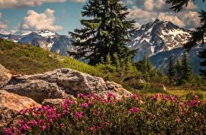Fotos Landschaftsfotografie Gebirge Vereinigte Staaten Washington Cascade Range