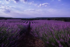 Fotos Spanien Landschaftsfotografie Felder Lavendel Malacuera