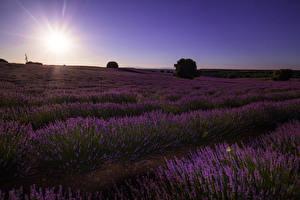Fotos Spanien Landschaftsfotografie Sonnenaufgänge und Sonnenuntergänge Felder Lavendel Malacuera