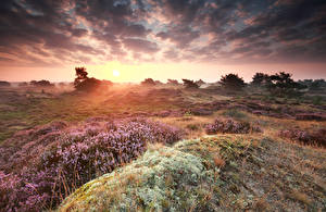 Wallpaper Sunrise and sunset Sky Grasslands Clouds Heather Flowers Nature
