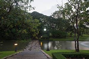 壁纸、、タイ王国、バンコク、公園、池、街灯、木、階段、自然