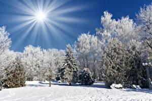 Papel de Parede Desktop Invierno Raios de luz Sol Neve árvores Naturaleza