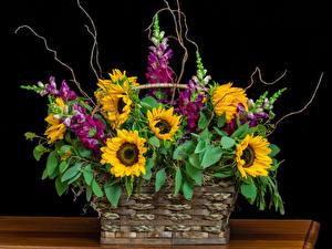 Hintergrundbilder Sträuße Löwenmäuler Sonnenblumen Schwarzer Hintergrund Weidenkorb Blumen
