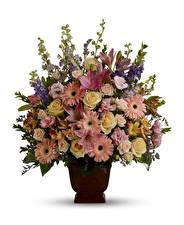 Fotos Sträuße Rosen Gerbera Lilien Alstroemeria Weißer hintergrund Vase Blumen