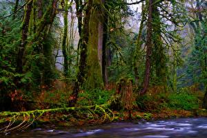 Hintergrundbilder Kanada Park Wälder Bäume Laubmoose Ast Goldstream Provincial Park Vancouver Island Natur