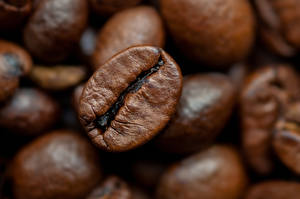 Pictures Coffee Macro photography Closeup Grain Food