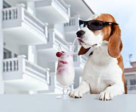 Photo Dog Cocktail Stemware Eyeglasses Funny Beagle Animals