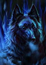 Hintergrundbilder Hunde Gezeichnet Nacht Kopf Starren Shepherd Groenendael ein Tier