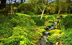 Bilder England Park Bach Rosemoor Gardens Natur
