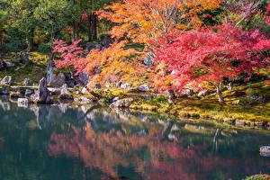 壁纸、、日本、京都市、公園、秋、池、木、自然