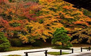 壁纸、、日本、京都市、公園、秋、木、自然