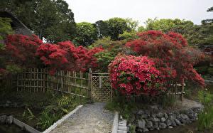 壁纸、、日本、京都市、公園、塀、自然