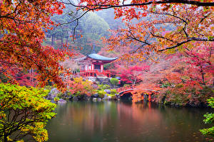 Picture Japan Kyoto Parks Pagodas Autumn Pond Branches Nature