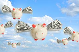Wallpapers Money Domestic pig Dollars Banknotes Sky Flight