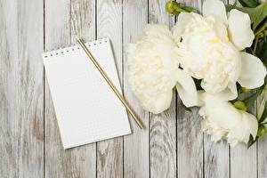 Fotos Pfingstrosen Notizblock Bleistifte Bretter Blumen