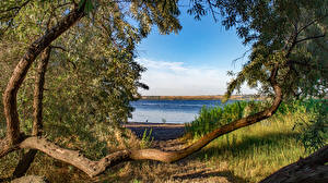 Bilder Ukraine Flusse Küste Ast Nikolaev Natur