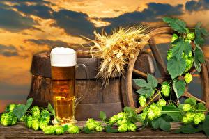 Fotos Bier Fass Echter Hopfen Becher Schaum Spitzen Lebensmittel