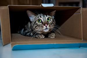 Hintergrundbilder Katze Starren Angst Süße Schachtel Tiere
