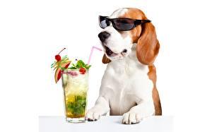 Wallpaper Dog Cocktail Glasses Beagle Highball glass White background Funny