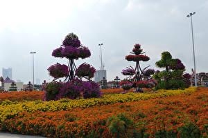 Images Dubai Gardens Tagetes Design Miracle Garden Nature