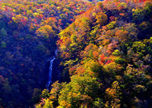 壁纸、、日本、森林、滝、秋、Zao Onsen Yamagata、自然