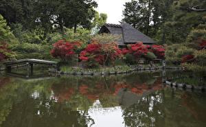 壁纸、、日本、京都市、公園、池、橋、低木、自然