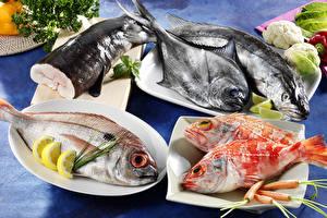 Bilder Meeresfrüchte Fische - Lebensmittel Zitrone Mohrrübe Teller Lebensmittel