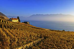 Bilder Schweiz Acker Herbst Weinberg Lavaux region