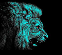 Picture Big cats Lions Painting Art Canine tooth fangs Head Roar Black background animal