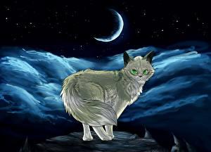 Hintergrundbilder Hauskatze Gezeichnet Mondsichel Nacht ein Tier