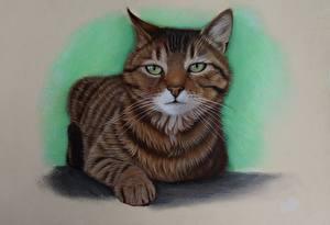 Fotos Katze Gezeichnet Starren ein Tier