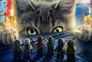 Photo Cats Ninja Glance The Lego Ninjago