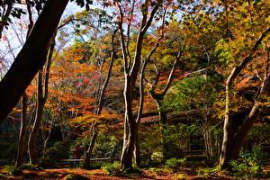 壁纸、、日本、京都市、公園、秋、木、Sagano、自然