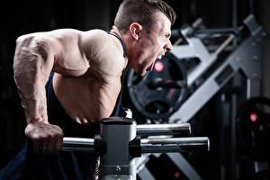 Bilder Mann Bodybuilding Muskeln Körperliche Aktivität Schrei Sport