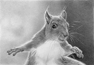 Bilder Gezeichnet Eichhörnchen Schwarzweiss