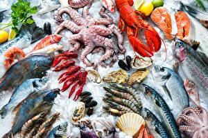 Pictures Seafoods Fish - Food Crayfish Caridea Ice Food