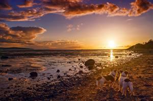 Bilder Sonnenaufgänge und Sonnenuntergänge Himmel Landschaftsfotografie Küste Hunde Steine Wolke