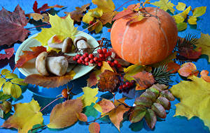 Hintergrundbilder Herbst Pilze Kürbisse Eberesche Blattwerk Natur