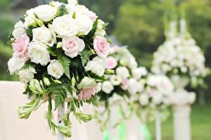 Fotos Blumensträuße Rose Freesie Blumen