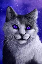 Hintergrundbilder Hauskatze Gezeichnet Schnurrhaare Vibrisse Starren