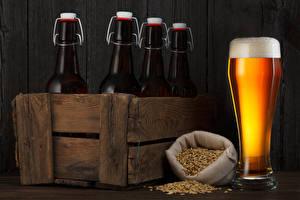 Pictures Drinks Beer Highball glass Bottles Grain Food