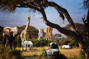 Wallpaper Elephants Giraffes Creative Laundry Day In Africa