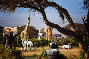 Wallpaper Elephant Giraffes Creative Laundry Day In Africa